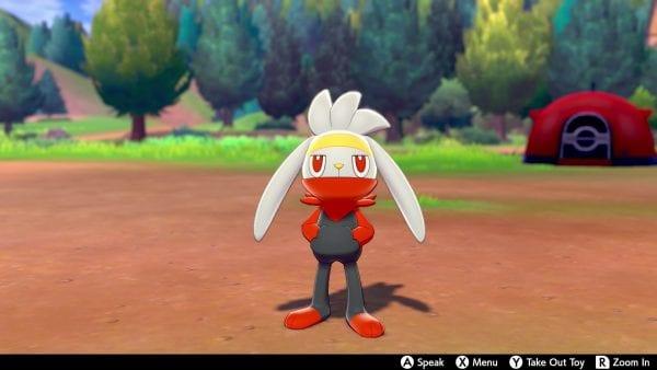 Raboot in Pokémon Camp