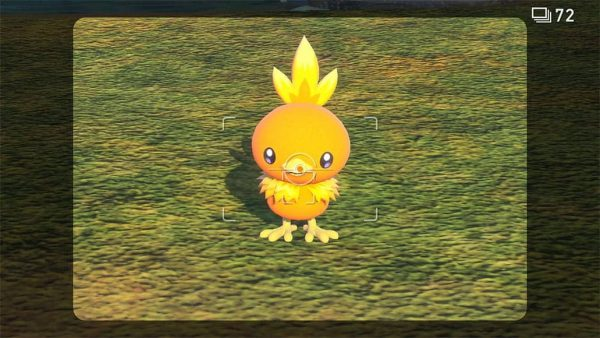 A picture of a Torchic looking at the camera